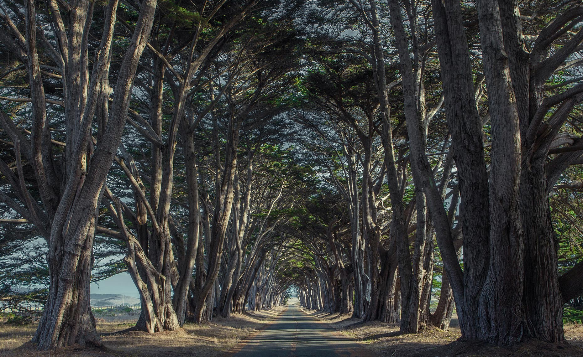Cypress Tree grove tunnel near Point Reyes California